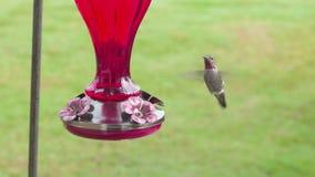 Hummingbird unosi si? blisko dozownika zbiory wideo