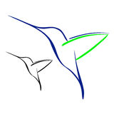 Hummingbird. Vector illustration : Hummingbird on a white background Royalty Free Stock Photography