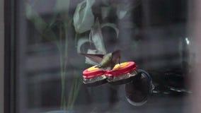 Hummingbird at a window feeder