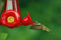 Hummingbird4 Imagen de archivo libre de regalías