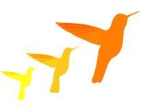 Hummingbirds vector illustration