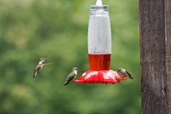 Hummingbirds at the Bird Feeder Stock Photos