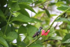 Hummingbirds are birds from the Americas that constitute the family. Trochilidae. They are among the smallest of birds They are known as hummingbirds because of stock images