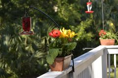 The hummingbirds can be territorial, so best to keep the feeders at least ten feet apart