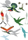 Hummingbirds collection on white Royalty Free Stock Photos