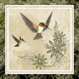 Hummingbirds & Design Background Stock Photos