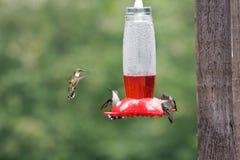 hummingbirds dozowników zdjęcie royalty free