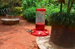 Hummingbirds dozowniki fotografia stock