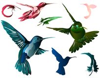 Hummingbirds & Feathers. Pen Moused in Illustrator. Hummingbirds and feathers in different colors and positions royalty free illustration