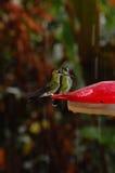 Hummingbirds on feeder Royalty Free Stock Photos
