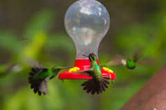 Hummingbirds at feeder Royalty Free Stock Images