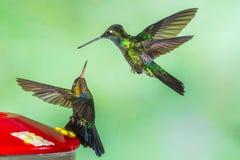 Hummingbirds At Feeder Stock Photography