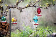 Free Hummingbirds Feeding On Nectar In Bird Feeders In Spring Royalty Free Stock Images - 172824129