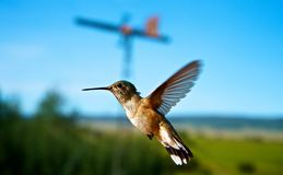 Hummingbirds in flight. Hummingbird in flight while feeding Royalty Free Stock Photography