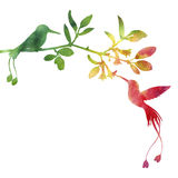 Hummingbirds and flowers silhouettes Royalty Free Stock Photography