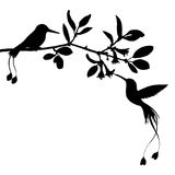 Hummingbirds and flowers silhouettes Stock Images