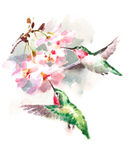 Hummingbirds flying around Flowers Watercolor Bird Illustration Hand Drawn Stock Photo