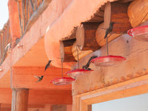 Hummingbirds at Mexican hotel Royalty Free Stock Photography