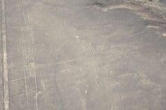 Hummingbirds Nazca line. Stock Photography