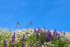Hummingbirds over summer background Royalty Free Stock Images