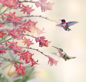 Hummingbirds and Red Flowers Stock Image