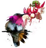 Hummingbirds and red flowers watercolor drawing Royalty Free Stock Images