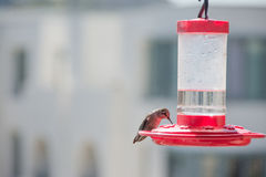 Hummingbirds seating on the red feeders Royalty Free Stock Images