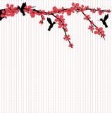 Hummingbirds som flyger runt om Cherryblomningen royaltyfri illustrationer