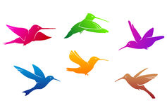 Hummingbirds symbols Stock Images