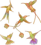 Hummingbirds Royalty Free Stock Photos