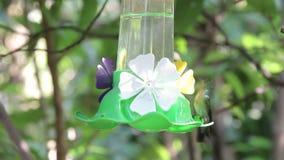 Hummingbirds woda pitna i trzepotać zdjęcie wideo