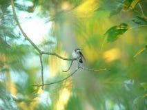 Hummingbirdvinge Royaltyfria Bilder