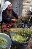 Hummus Harvest. BETHLEHEM, PALESTINIAN TERRITORIES - MAY 26: Elderly Palestinian Arab women help with the harvesting of hummus (chic peas or garbanzo beans), in Royalty Free Stock Photo