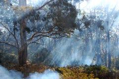 Humo de Bush del fuego en montañas azules, Australia Imagen de archivo libre de regalías