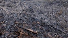 Humo de las cenizas después del incendio forestal almacen de video