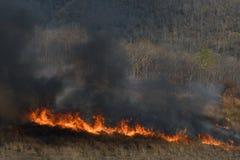 Humo del incendio fuera de control en el más forrest Imágenes de archivo libres de regalías
