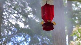 Humo detrás del alimentador del pájaro del tarareo almacen de video