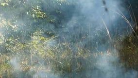 Humo en el bosque almacen de video