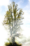 Humo y árbol con los rayos del sol Imagen de archivo libre de regalías