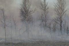 Humo y árboles quemados enseguida después del incendio forestal Fotos de archivo