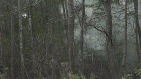 Humo y fuego en la madera almacen de video