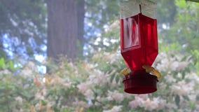 Humo y rododendro detrás del alimentador metrajes