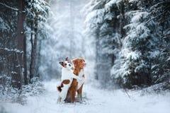 Humor, amizade e amor do inverno de dois cães fotografia de stock royalty free