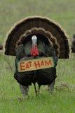 Humor de la acción de gracias: ?Coma el jamón? Turquía Fotografía de archivo