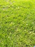 Humor de la hierba verde y de la primavera del parque fotos de archivo