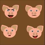 Humor del cerdo Imagen de archivo libre de regalías