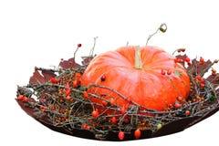 Humor del otoño Imagen de archivo libre de regalías