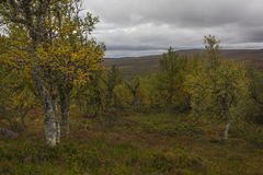 Humor del otoño en Suecia Foto de archivo