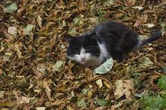 Humor del otoño en un gato Foto de archivo