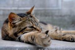 Humor diario del gato Fotos de archivo libres de regalías